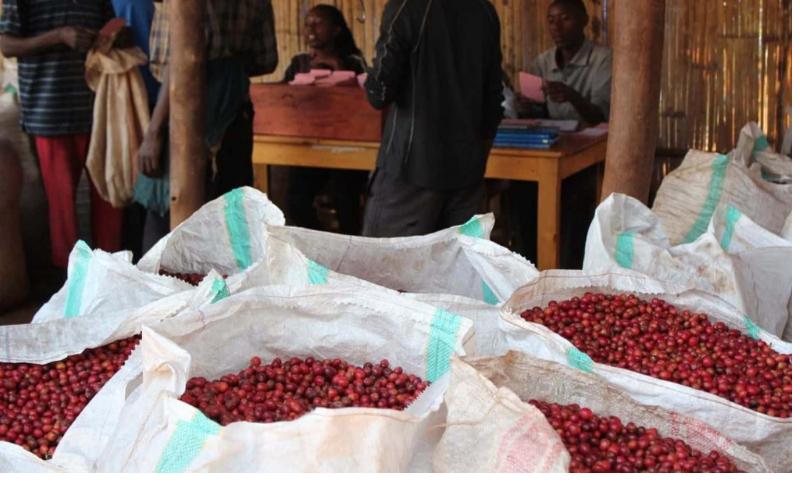 Кафе Бурунди