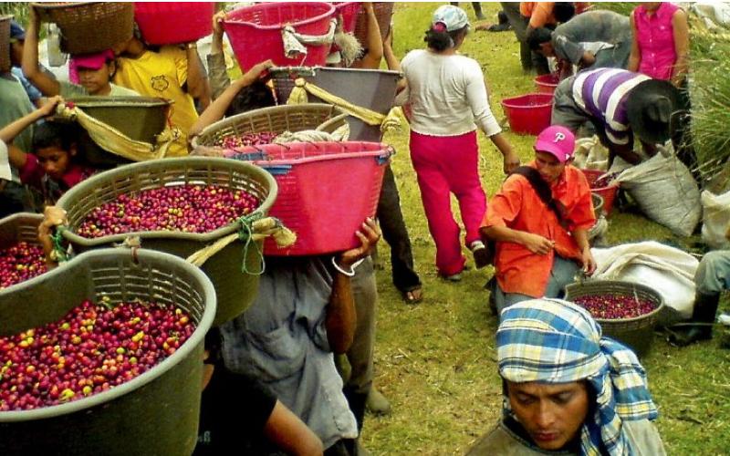 Районите за кафе в Коста Рика